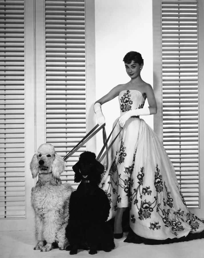 Audrey Hepburn, Sabrina Publicity Photo with Dogs