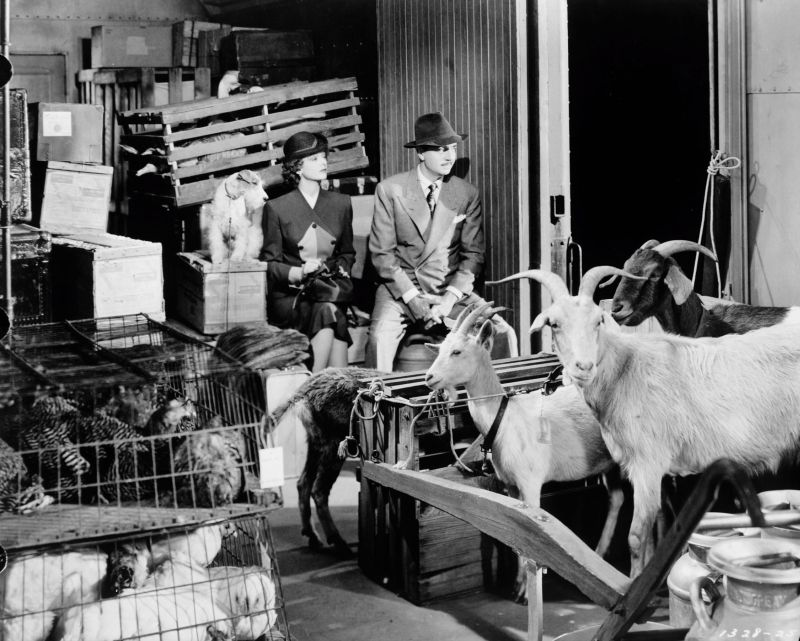 The Thin Man Goes Home, Myrna Loy and William Powell with Asta!